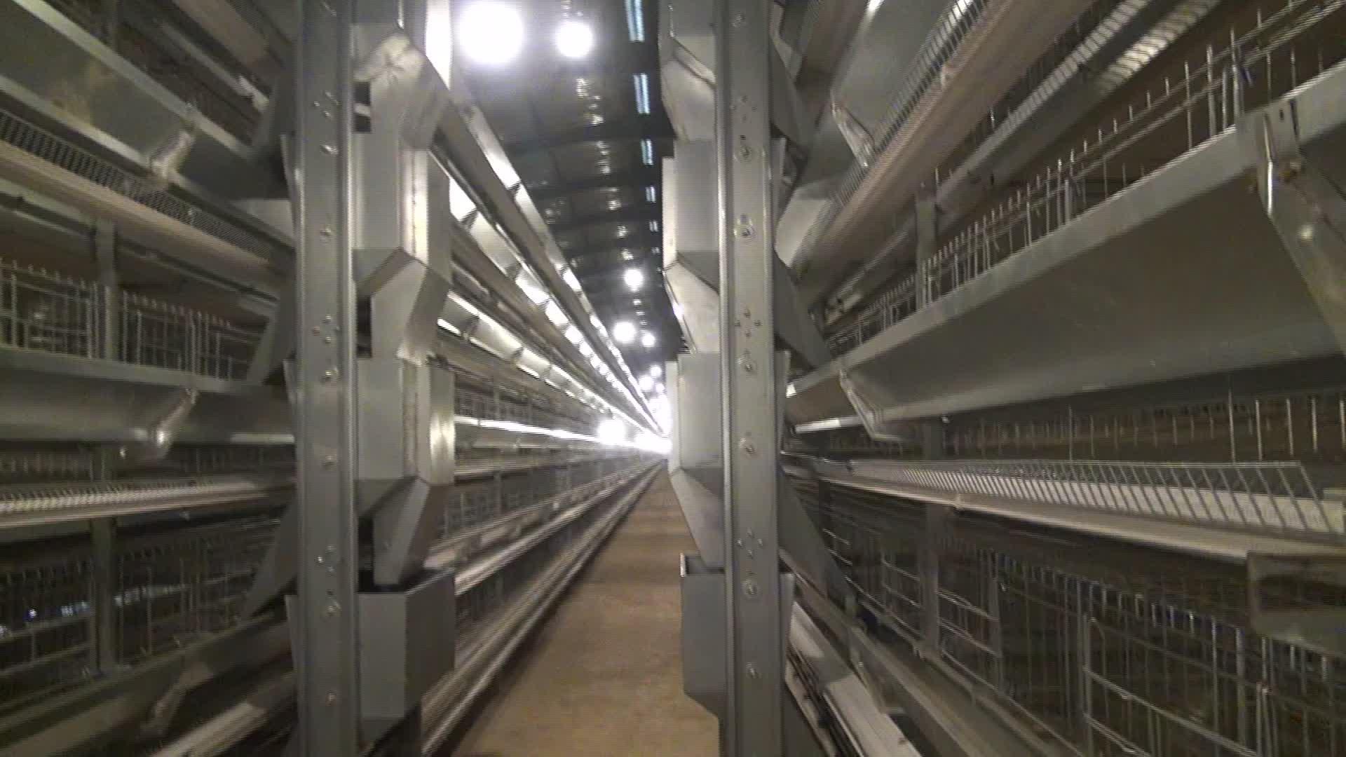 Panas Dicelup Galvanis Ayam Peternakan Unggas Peralatan untuk Afrika Peternakan Ayam