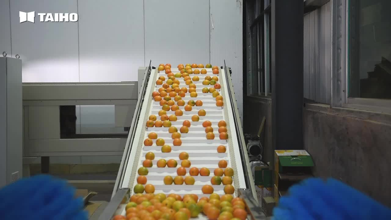 FRUIT AND VEGETABLE GRADIN SYSTEM,Pineapple Grading Machine,Pomegranate Classifying Machine