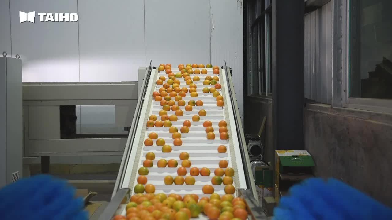fruit grading system apple grading machine
