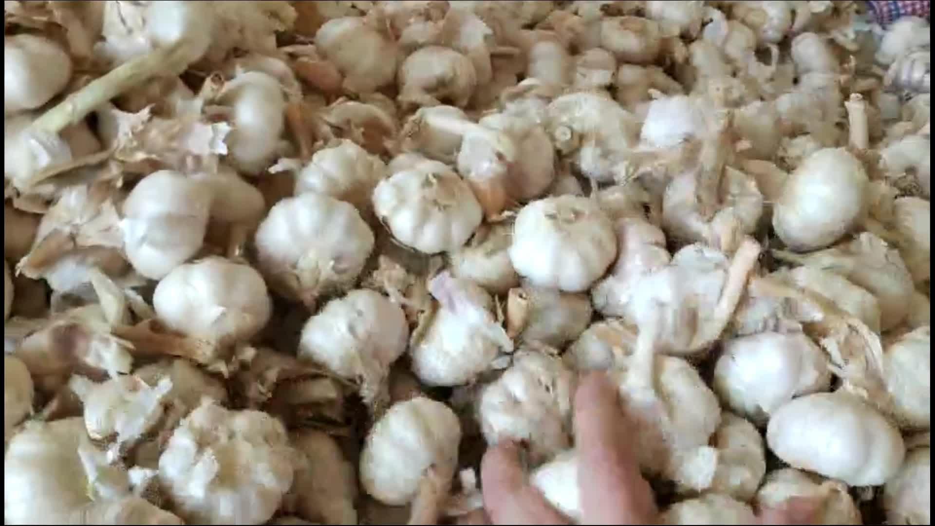 5.5cm 10kg Box packing Chinese Fresh White Garlic