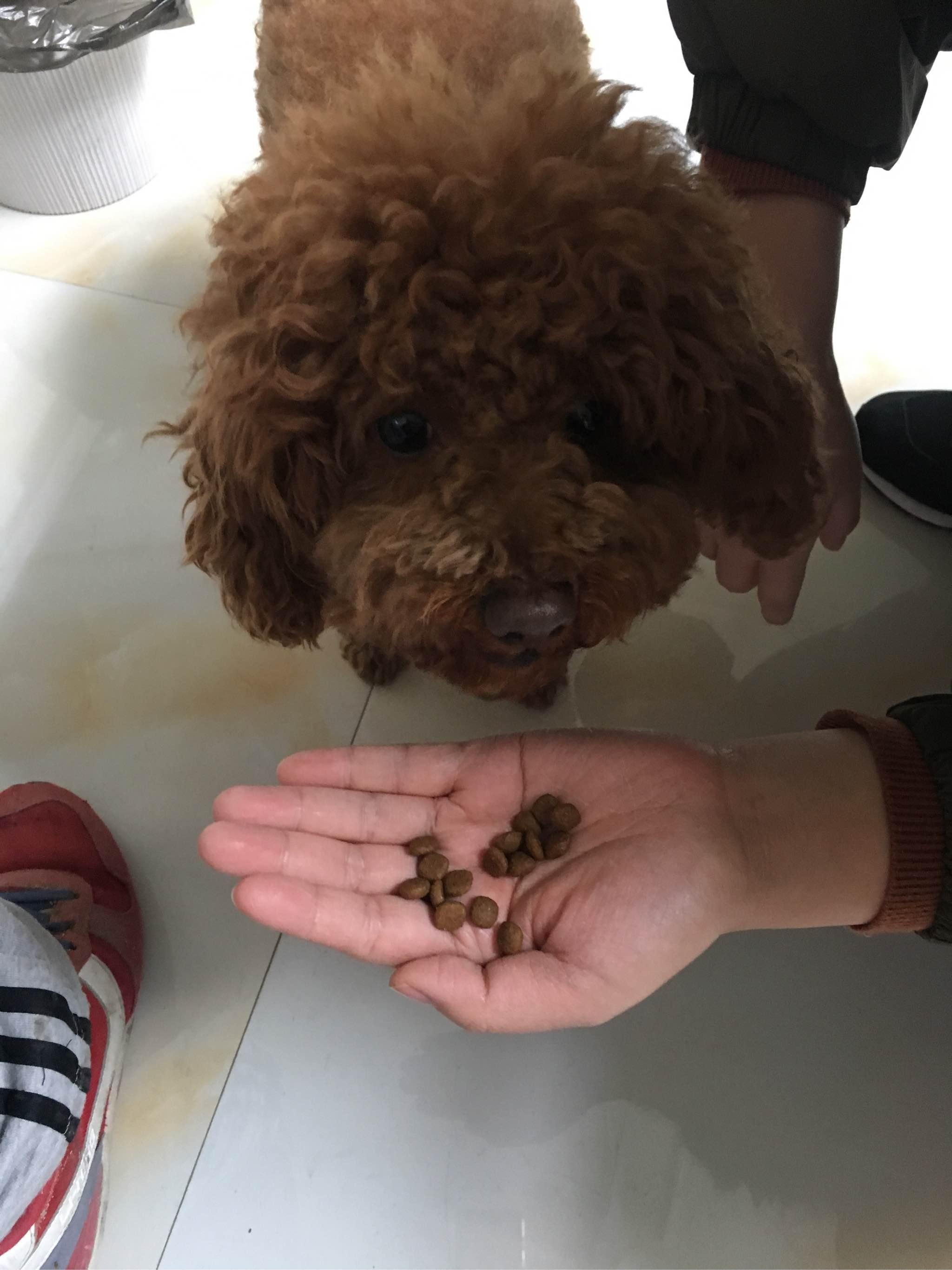 我家泰迪超爱吃格拉腾这个牌子的狗粮