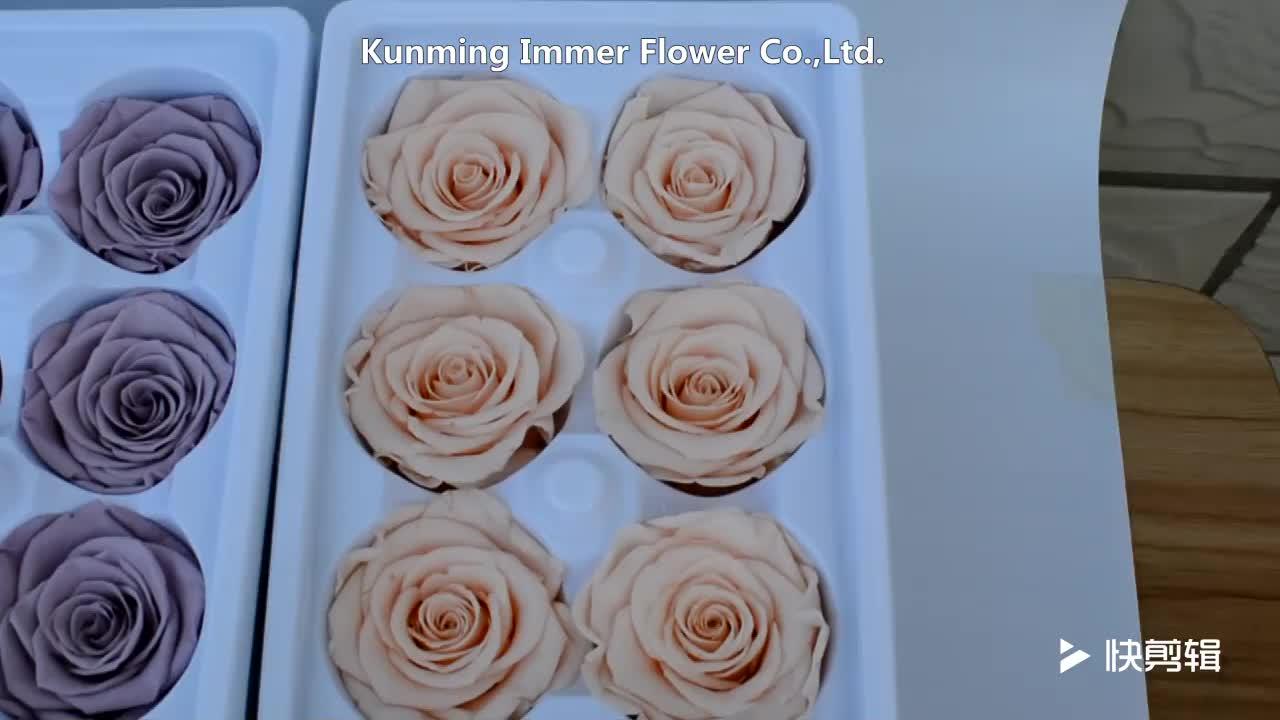Infinity Rose Bewaard Eeuwige Rozen met Lange Levensduur Voor Verkoop