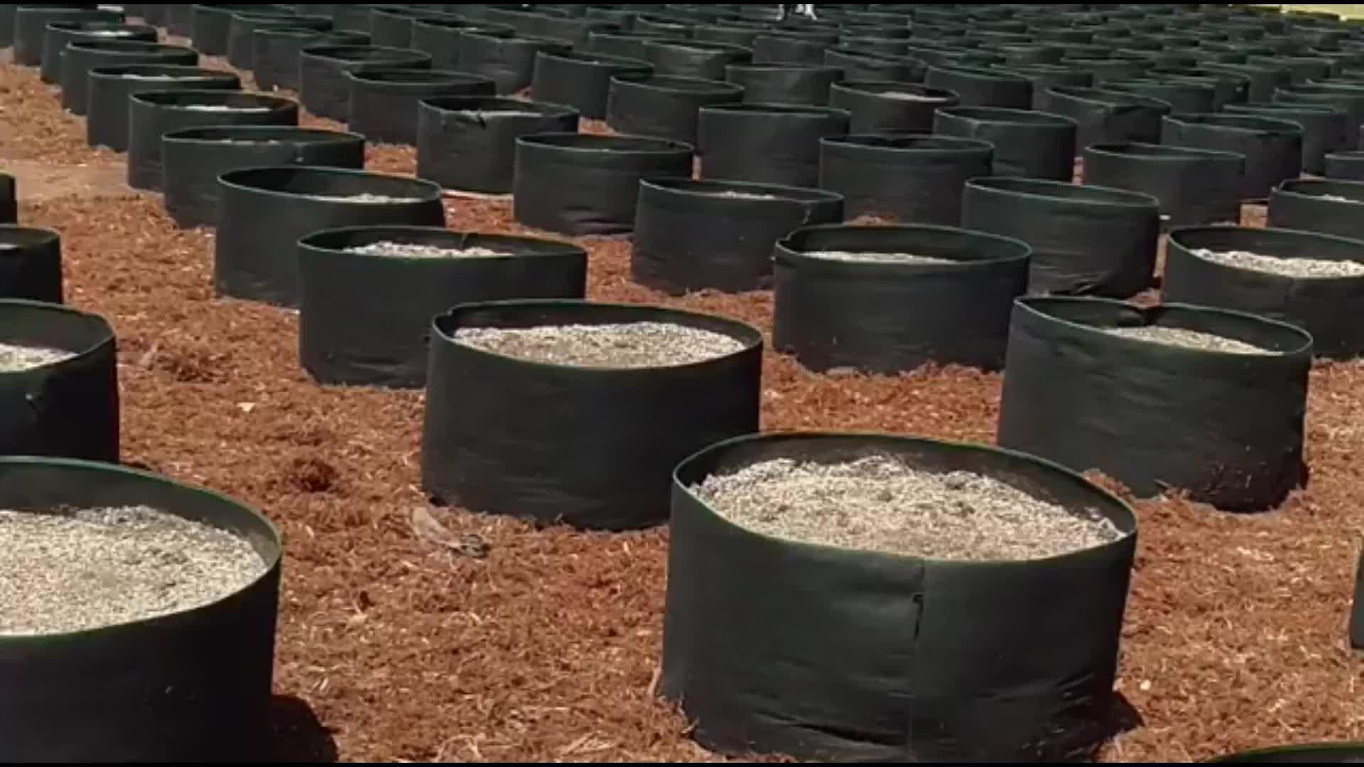 3 / 5 / 7 / 10 / 15 / 20 / 25 / 45 / 60 Gallon Felt Fabric Pot Grow Bag for trees