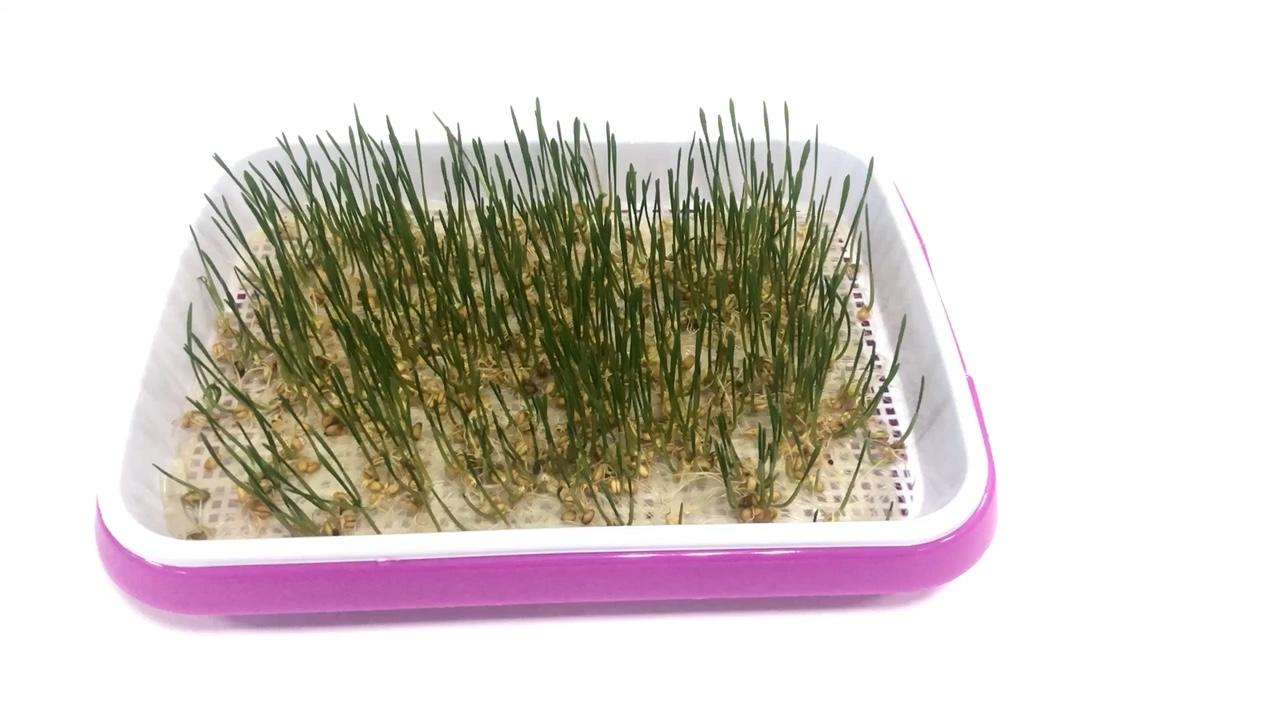 씨앗 Sprouter 트레이 BPA 무료 콩나물 재배 발아 키트