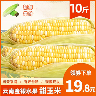Freshly picked Yunnan gold and silver bicolor fruit corn 10 pounds raw eat instant golden rock sugar sweet corn on the cob