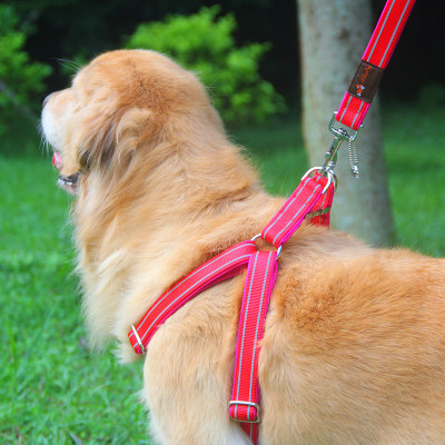 Strong dog chain dog traction rope chest strap hi dog rope Samo Golden Mao Zhongli Pet Products