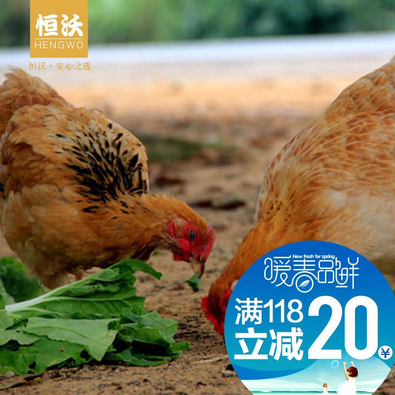 恒沃农家产蛋老母鸡煲汤营养美味土鸡老母鸡第2只半价