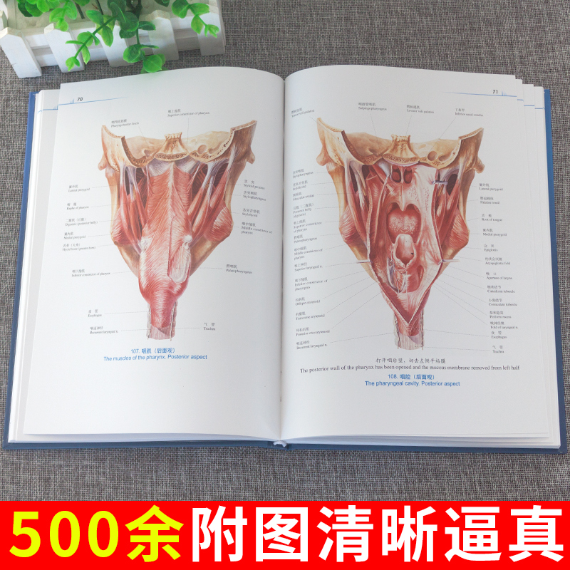 USD 23.35] Human anatomy color Atlas 2nd edition Guo guangwen Wang ...