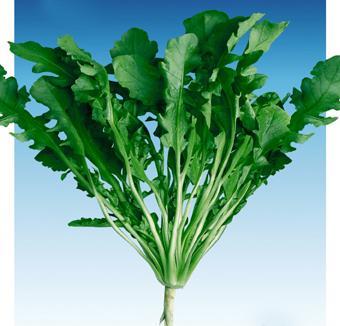大叶荠菜种子