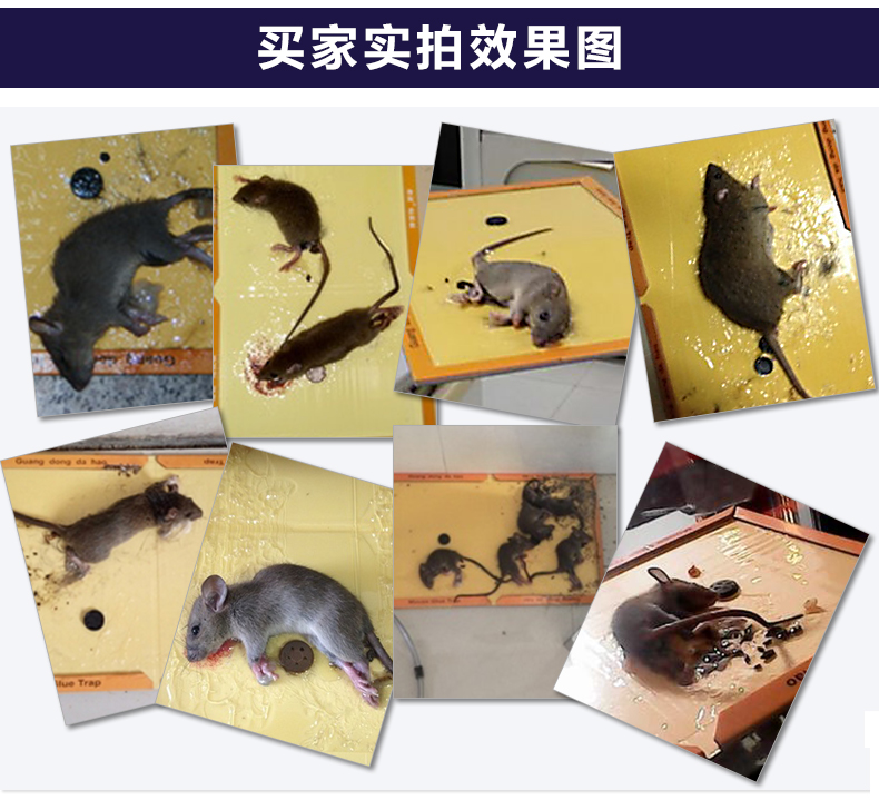 Insect Cockroach Mouse Board Sticky Rat Glue Trap Mouse
