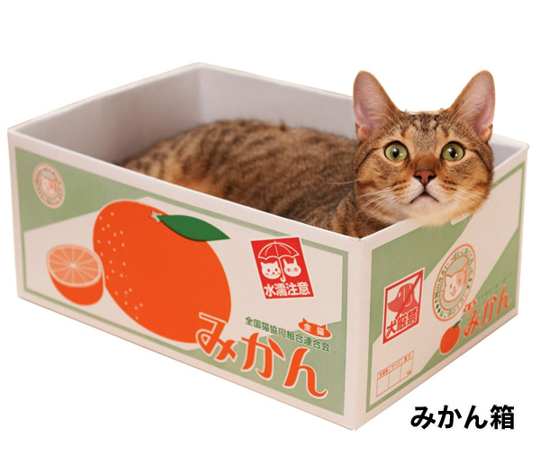 Кошка-кошка панель Коробка для мусора для кошки, которая может быть скошена панель Дизайн картонной коробки для животных