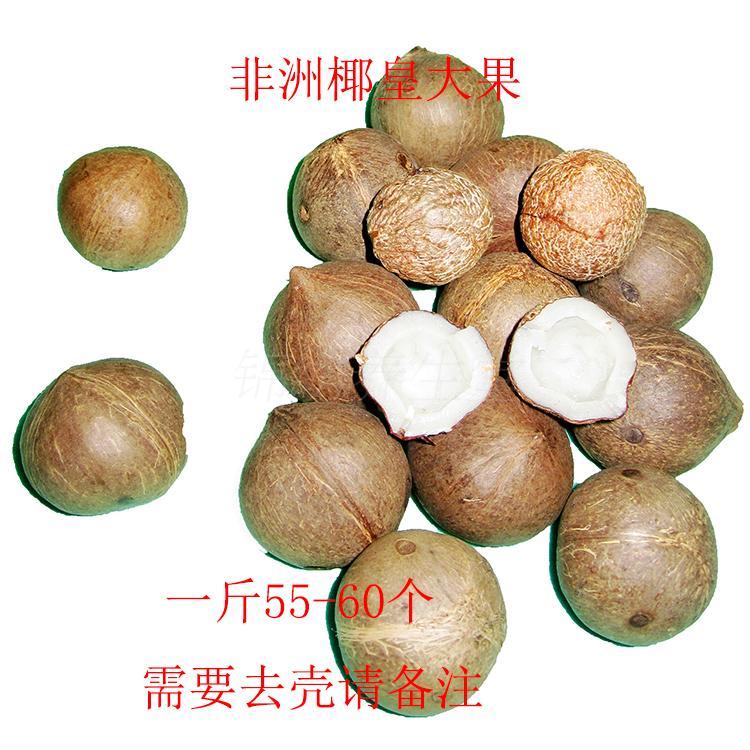 新货非洲 进口海椰皇 海椰子皇海椰王复大果500克包邮坏果包赔