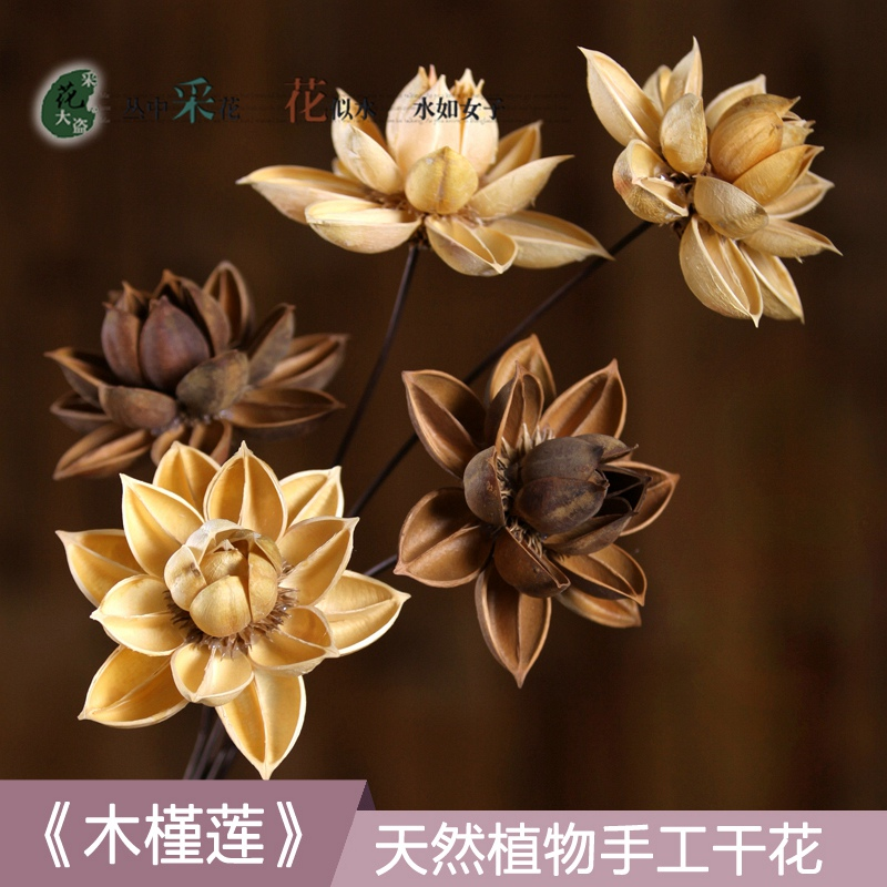 Hibiscus lotus dried lotus flower really hualien yunnan dried flower hibiscus lotus dried lotus flower really hualien yunnan dried flower bouquet simulation flower living room decoration mightylinksfo