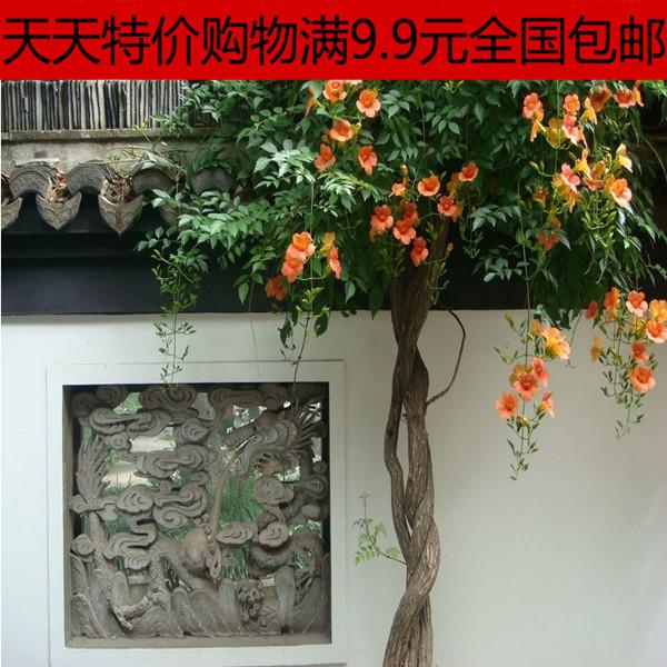 进口新品矾根花苗种苗 多年生彩叶耐寒 庭院花坛道路绿化植物