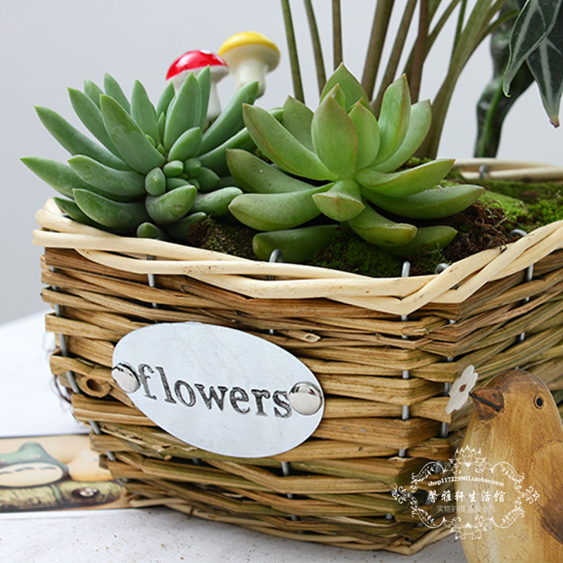 ChinaHao.com & Multi-meat pots mostly meat plant pots weaving personality simple decoration creative rattan wicker flower pots baskets