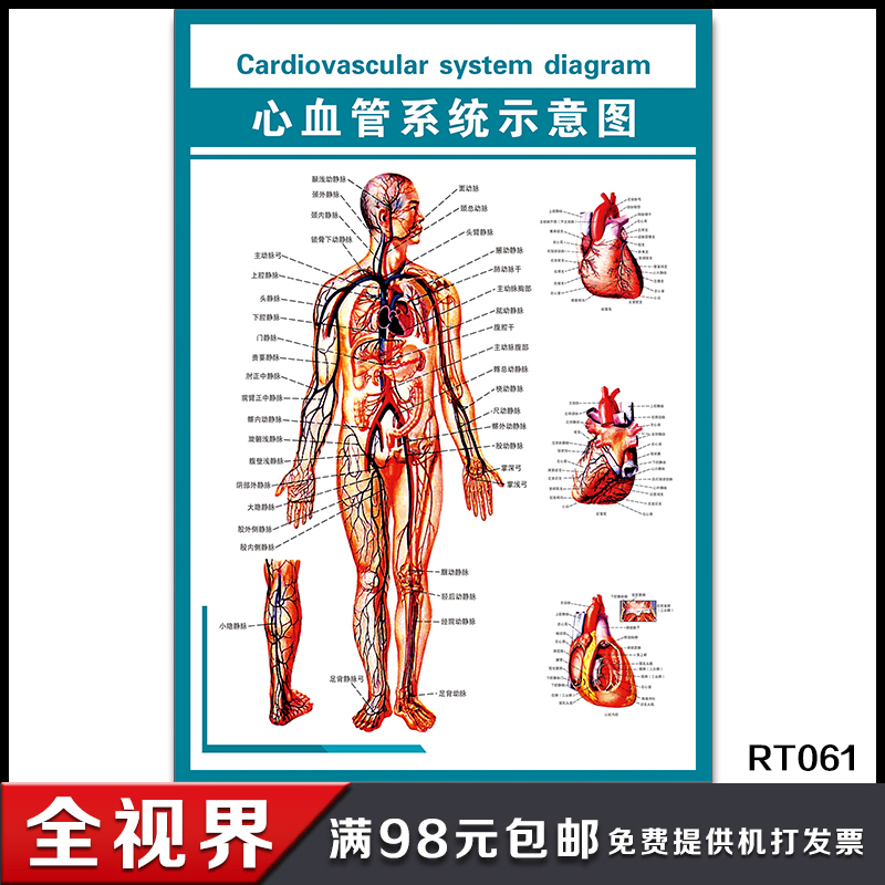 Usd 600 Diagram Of The Cardiovascular System Anatomy Of The Human