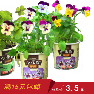 Small flower farm planting office desktop mini plant DIY indoor green planting creative gift children planting seeds