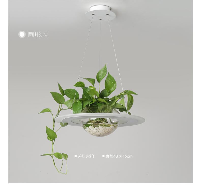 植物吊灯创意绿植水培灯酒店茶室咖啡厅阳臺吊灯黄金葛饭厅吊灯详细照片