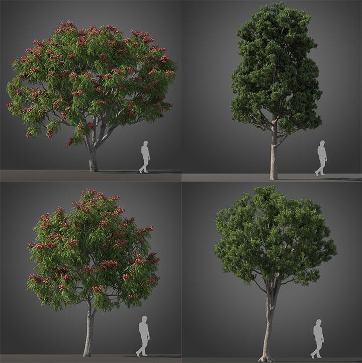 3dsmax VRay亚热带树木植物高品质3D模型