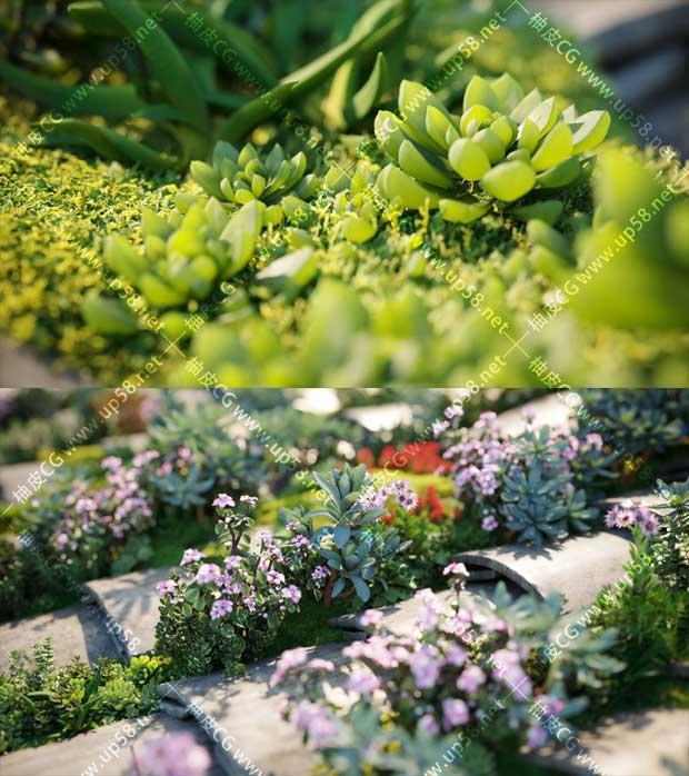 3DSMAX / VRay / Corona多肉盆栽花卉植物高品质3D模型素材