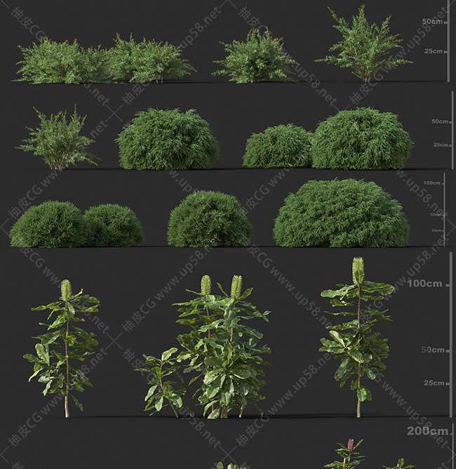 3DSMAX / VRay / Corona园林树木草类植物高质量3D模型