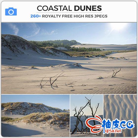 260+张沙丘灌木丛散落的枯枝平面设计高清素材库