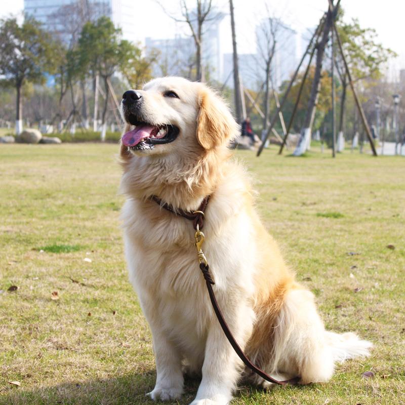 Ошейник для животных петкер Pet воротник собака воротник домашнее животное р цепь собака цепь высокого качества латунь оснастки крышек нагруженный термин
