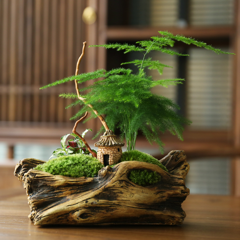Wenzhu small bonsai office potted plants indoor clean air four seasons evergreen plants flowers asparagus potted plants
