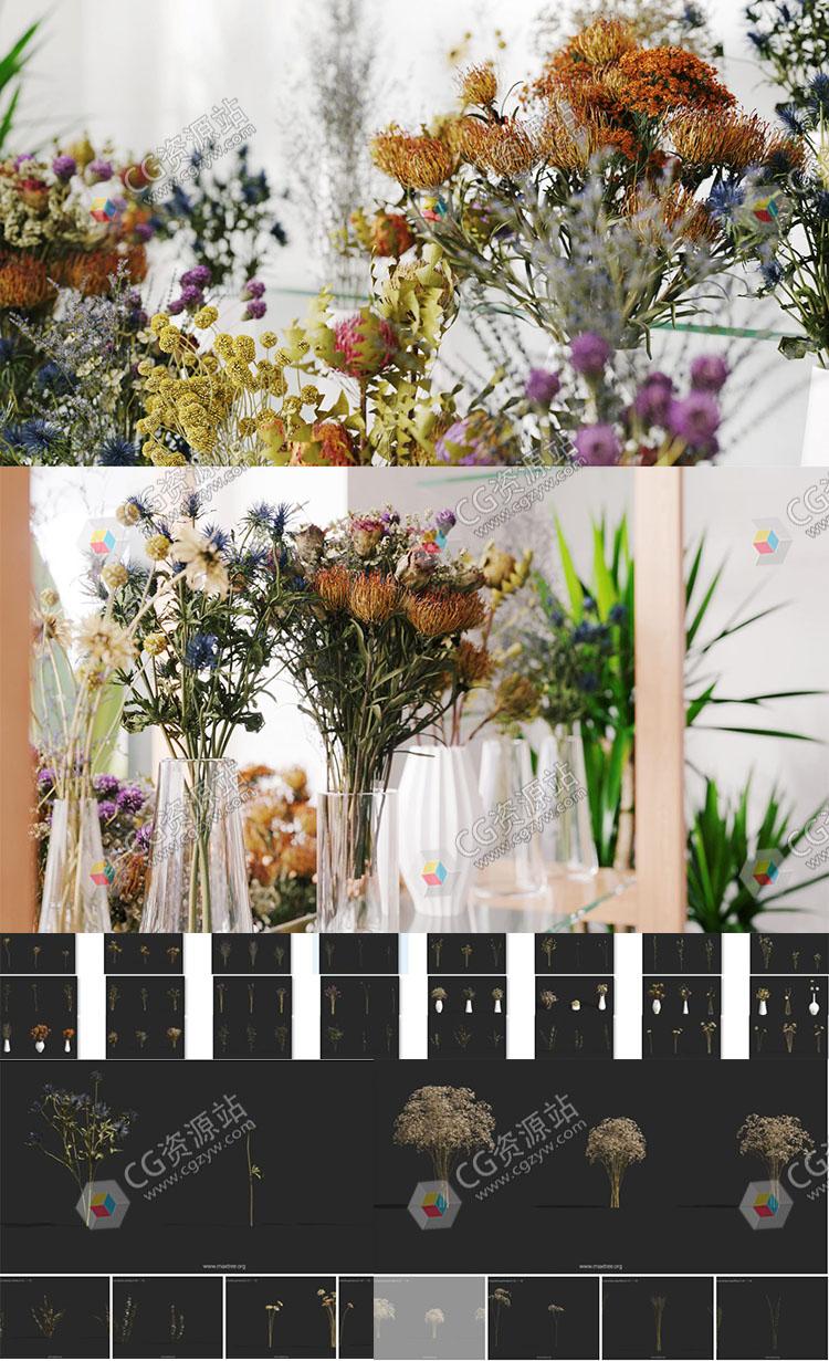 102个单模干花植物3D模型第53卷