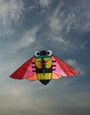 Soaring kites 2016