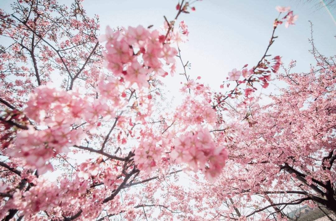 春暖花开,三招增强免疫力焕发神采0