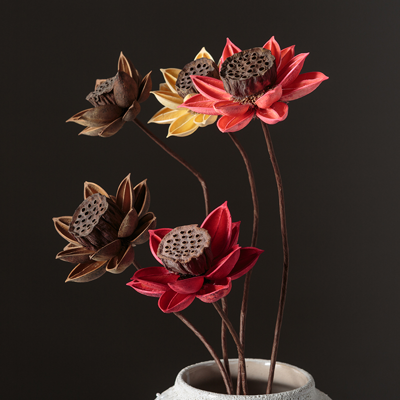 Dry Lotus Dried Flower Bouquet Dry Lotus Flower Real Flower Natural