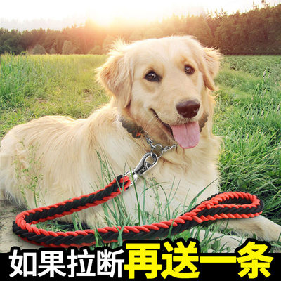 Dog chain dog rope medium large dog dog traction rope gold hair labrador P chain dog traction rope supplies