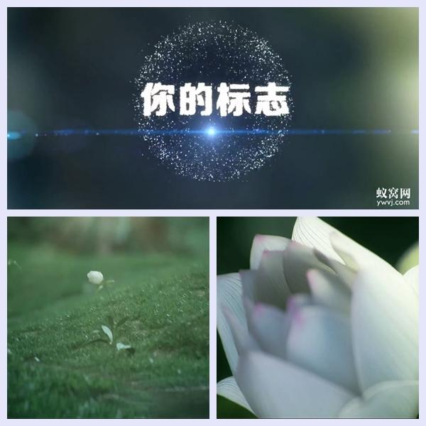 B113AE模板女性植物生长微商美妆产品LOGO粒子片头视频制作模