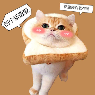 Cat new universal Elizabeth Rod toast Bread head set water honey peach anti-licking circle cat net red jewelry photo