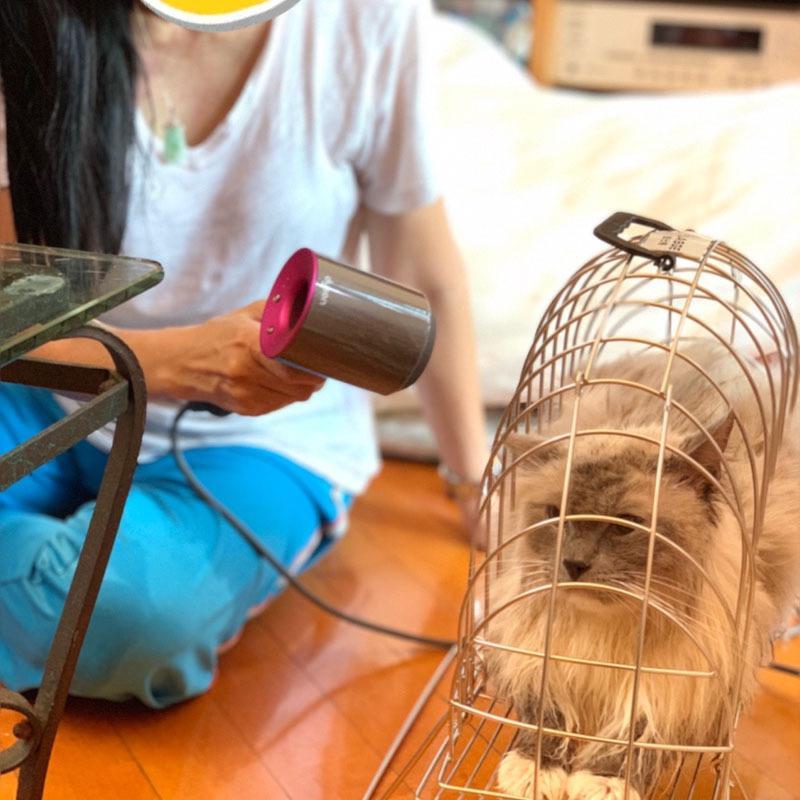 Thép không gỉ thế hệ thứ 6 lồng tắm mèo rửa lồng chống cào cắn chuyên nghiệp thổi khô cầm tay mèo rửa - Cat / Dog hàng ngày Neccessities