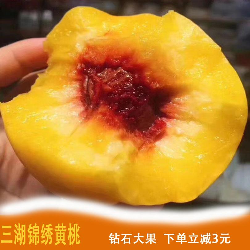 水果摘湖北三湖现货黄桃5斤大果新鲜黄金锦绣毛水蜜桃子纯甜特级