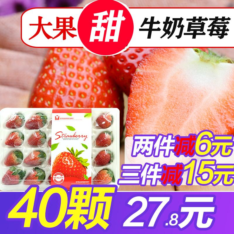 牛奶草莓新鲜水果包邮奶油巧克力红颜大草莓孕妇当季非丹东995
