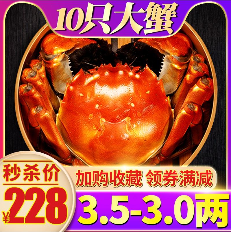 阳澄湖镇大闸蟹商会鲜活螃蟹六月黄特大蟹公母蟹礼盒10只现货