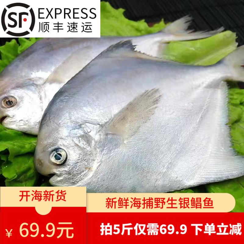 仙味鼎 青岛新鲜冷冻野生白鲳鱼 净重4.5斤以上 双重优惠折后¥49.9顺丰包邮(拍5件)
