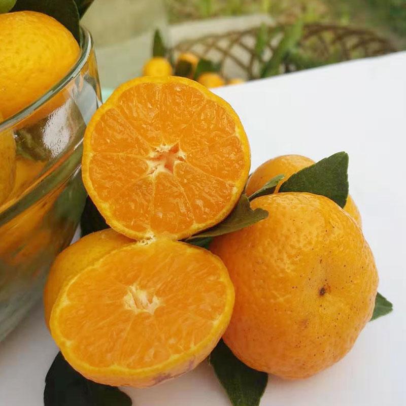 预售广西正宗砂糖橘当季新鲜现摘水果装新鲜薄皮沙塘桔水果