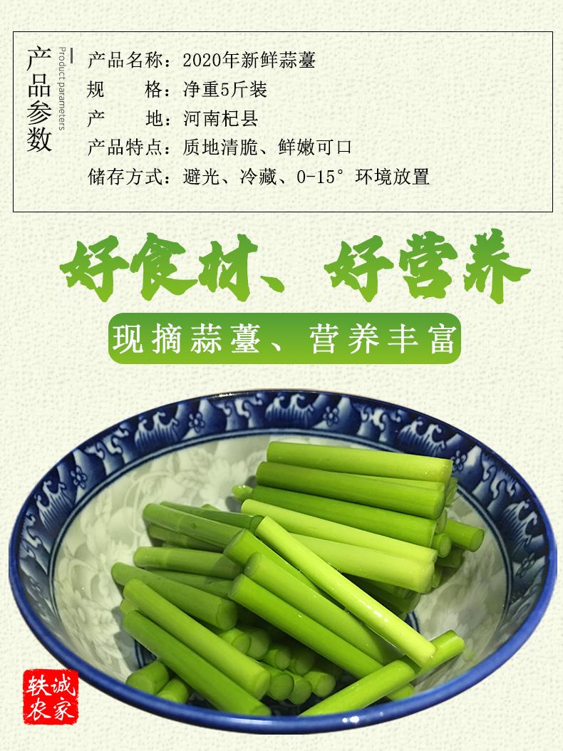 年河南大蒜蒜薹新鲜现摘斤蒜薹蒜毫农家自种特产蔬菜青菜详细照片