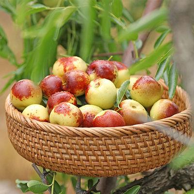 山东沾化冬枣现摘现发新鲜时令水果5斤东枣脆甜大枣青枣红枣整箱