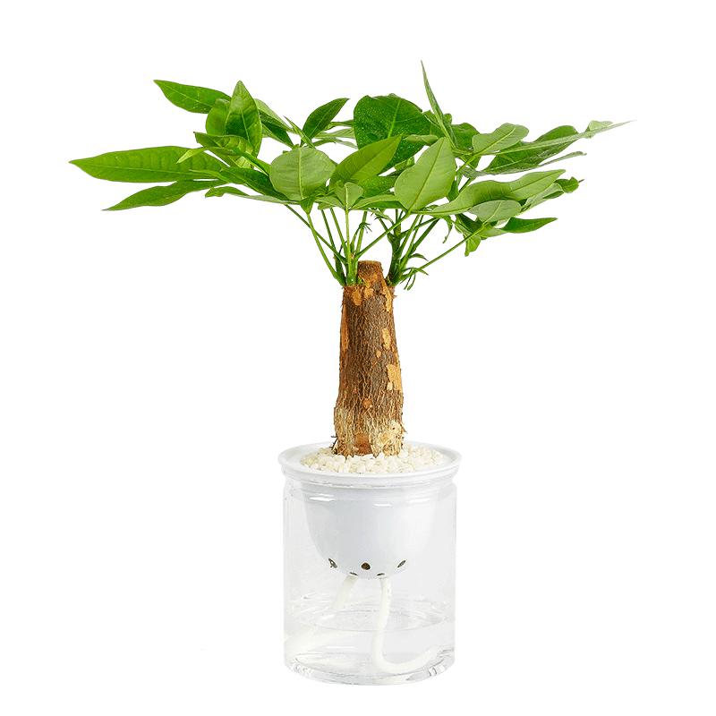 【爆款返场6.9元】多种盆栽绿植可选
