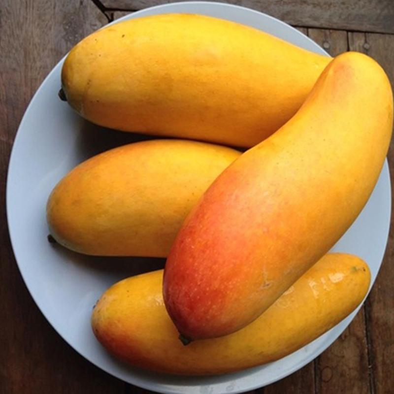 【现货精品】泰国释迦摩尼芒果进口包邮新鲜水香甜汁无丝不塞牙