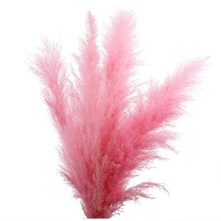 芦苇花粉色芦苇干花花束大芦苇干花