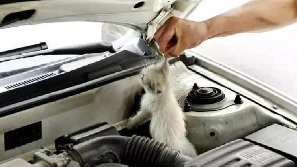 天冷车启动前,记住一定要拍拍引擎盖