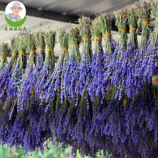 Xinjiang Yili dried lavender bouquet natural true flowers dried in the shade flowers living room home vase decoration tranquilizing sleep