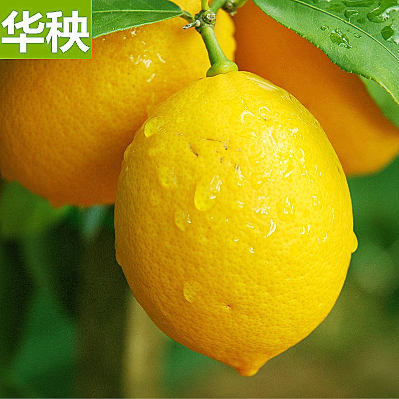 华秧!四川安岳黄柠檬鲜果500g