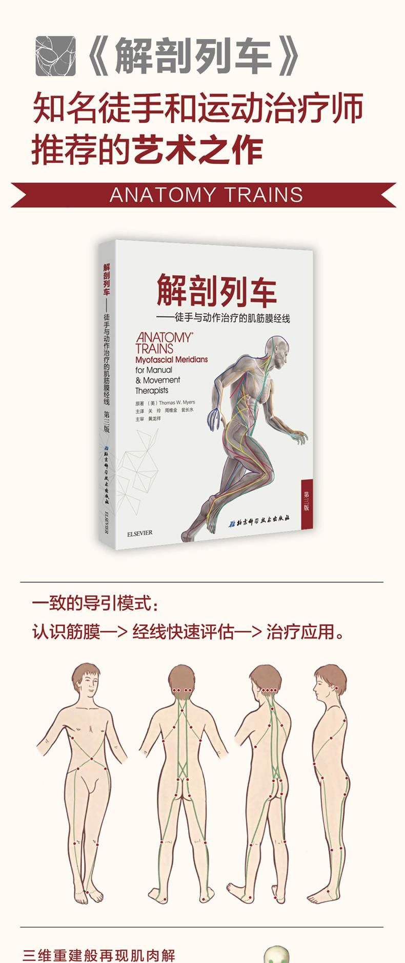 Genuine Spot]Anatomy Trains Simplified Chinese Third Edition 3rd ...